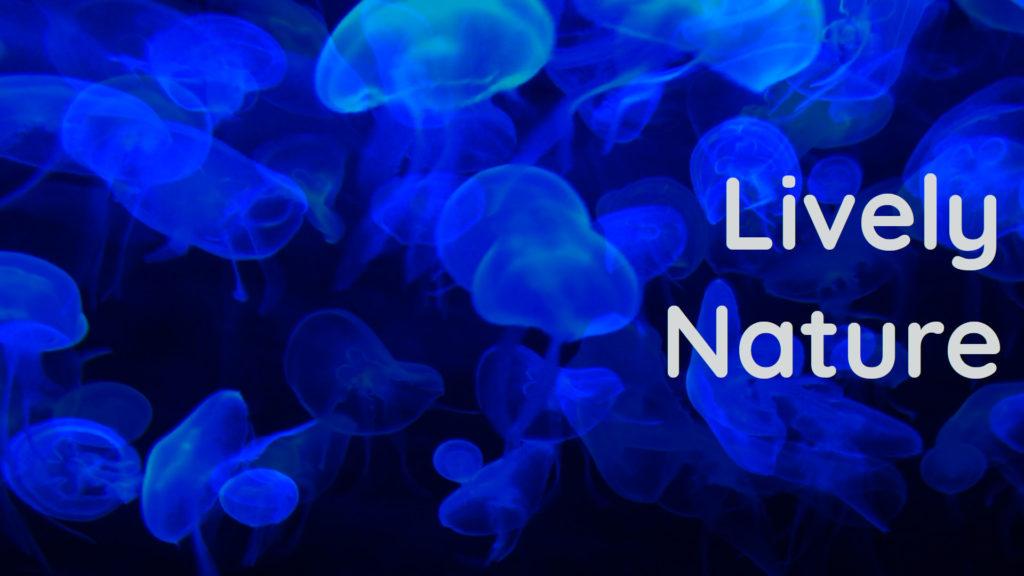 Blue Jellyfish Aquarium sounds to calm your brain