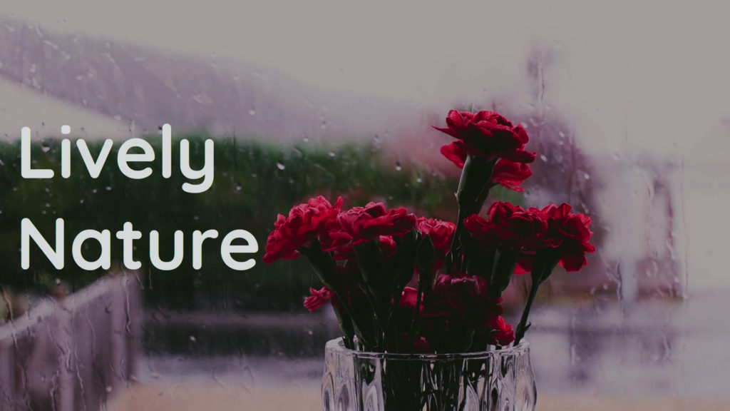 Gentle and relaxing rain. The nature helps you study, work and sleep