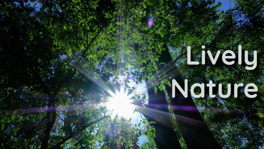 Spring in nature, relaxing sounds, and songs of birds | Promote your relaxation