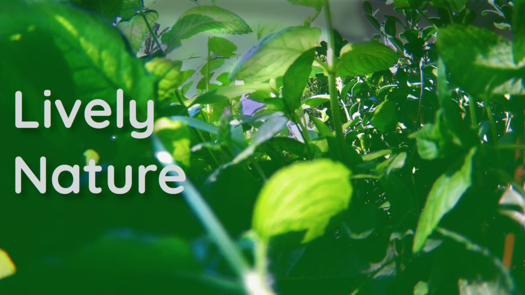 Green plants music for total relaxing and deep sleeping