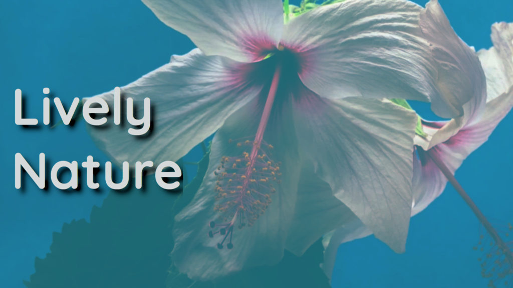 The healing power of flowers. A video to renew body and mind