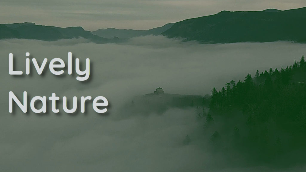 A mystical fog that comes from pure absolute silence. Sounds and frequencies for your wellness