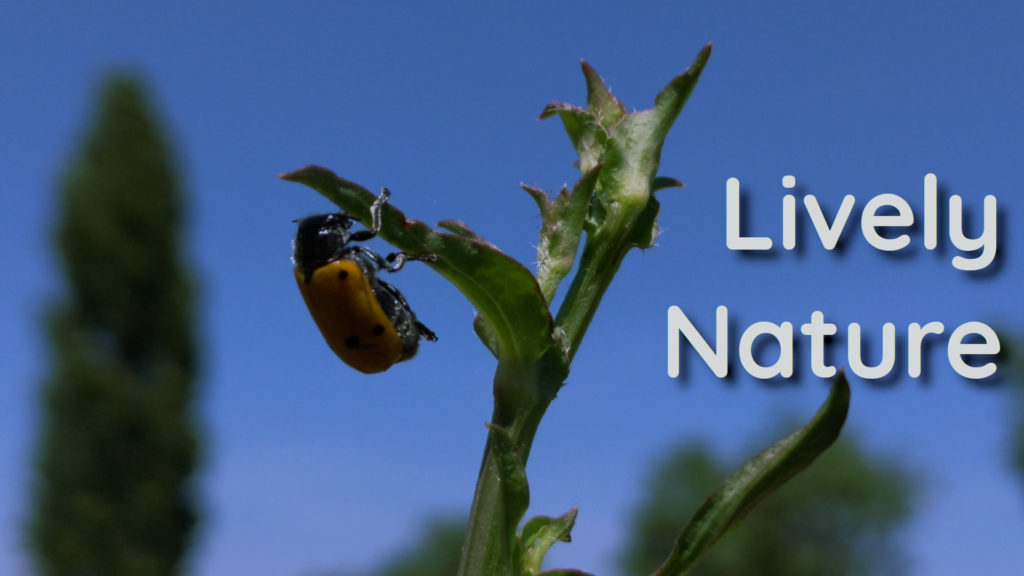 Natural positive frequencies. The miraculous ladybug helps you to relax and find meditation control
