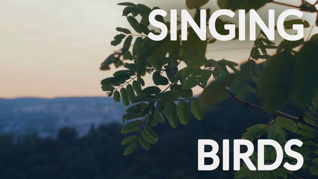 One hour of gentle singing birds in the forest for total relaxation | 4K video and high-quality audio