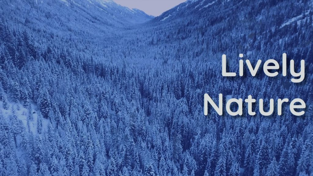 Clean air, snow, and an open mind. The total relaxation for Yoga sessions, studying or sleeping