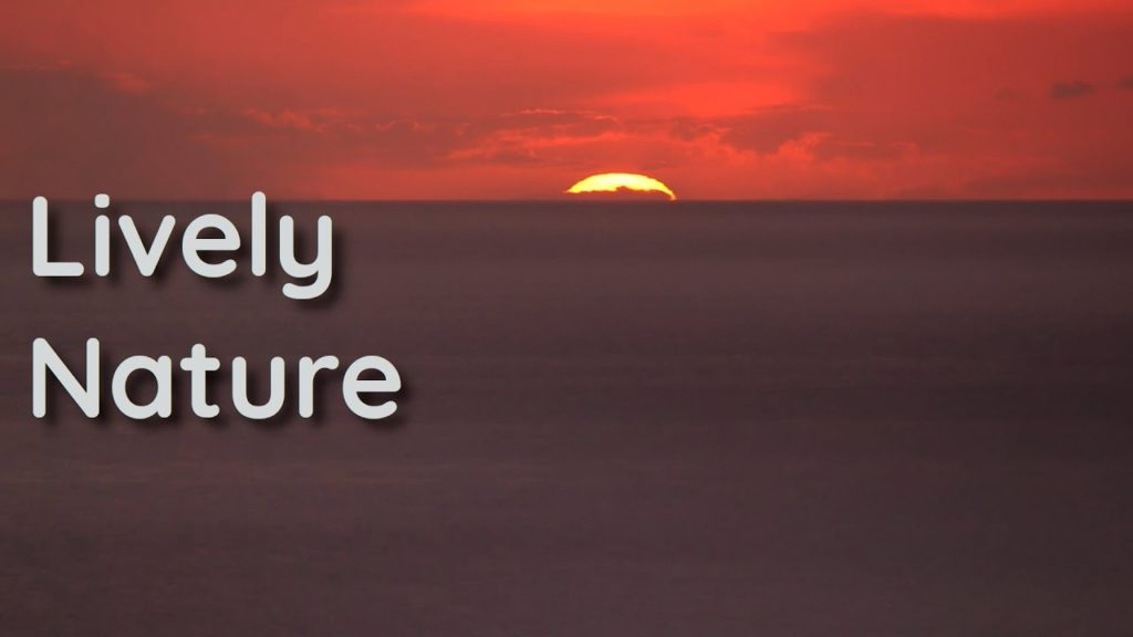 Music and sounds for your relaxation. Peace of mind with the sunset of life that rises again