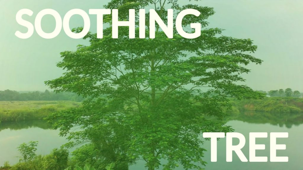 No more deep troubles with the help of the soothing relaxing tree for a complicated, painful, and hurting mind
