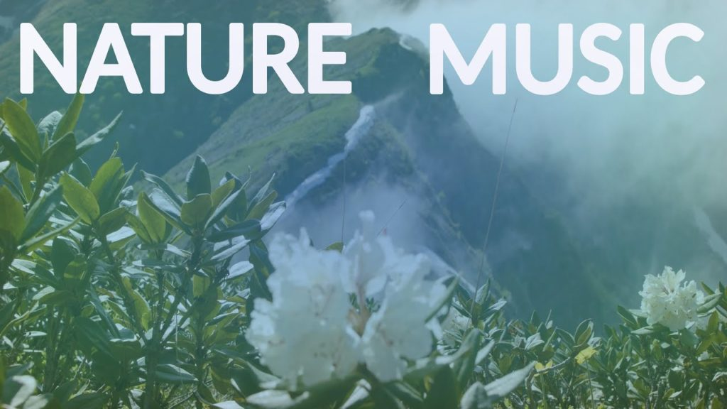 Nature Sounds and Music. The Flowers of the Mountain Forest for Relaxing Natural Soothing Ambient