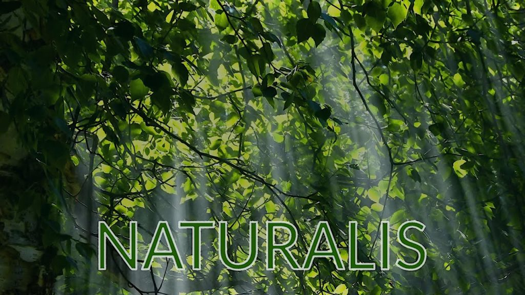 The Relaxing Sounds of the Perfect Natural Serenity. NATURALIS – Peaceful Soothing Instrumental Music