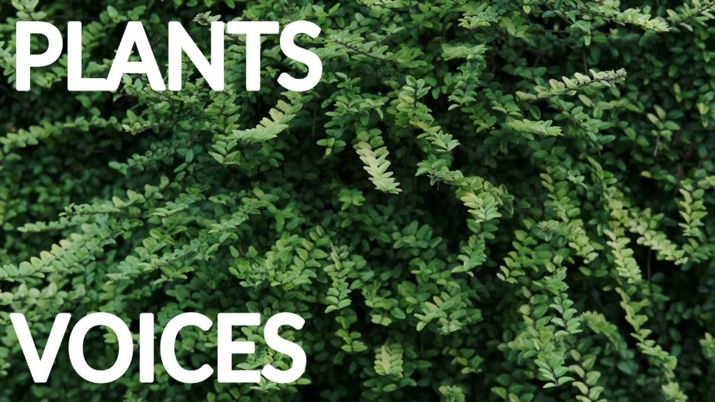 Start getting better today! The soothing natural voices of plants benefit body and mind